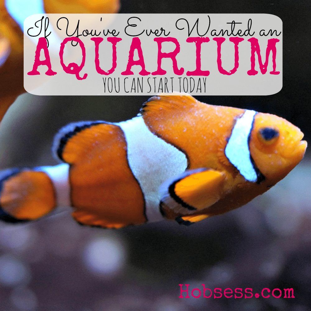 Get an Aquarium