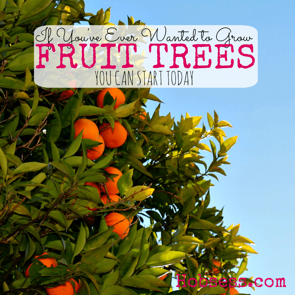 Grow Fruit Trees